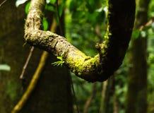 Tropikalny tropikalny las deszczowy - Costa Rica Obraz Royalty Free