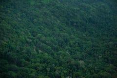 Tropikalny tropikalny las deszczowy, Khao Yai park narodowy Tajlandia (świat H Zdjęcie Royalty Free