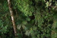 Tropikalny tropikalny las deszczowy, Khao Yai park narodowy Tajlandia (świat H Zdjęcie Stock