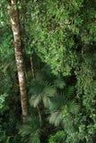 Tropikalny tropikalny las deszczowy, Khao Yai park narodowy Tajlandia (świat H Obraz Stock