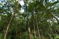 Tropikalny tropikalny las deszczowy, Khao Yai park narodowy Tajlandia (świat H Obrazy Royalty Free