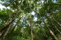 Tropikalny tropikalny las deszczowy, Khao Yai park narodowy Tajlandia (świat H Fotografia Royalty Free