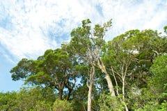 Tropikalny tropikalny las deszczowy, Khao Yai park narodowy Tajlandia (świat H Zdjęcia Royalty Free