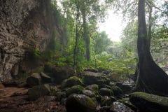 Tropikalny tropikalny las deszczowy, Khao Yai park narodowy Tajlandia świat H Obrazy Stock