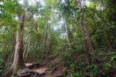Tropikalny tropikalny las deszczowy, Khao Yai park narodowy Tajlandia świat H Zdjęcia Royalty Free