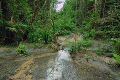 tropikalny tropikalny las deszczowy strumień Zdjęcia Royalty Free