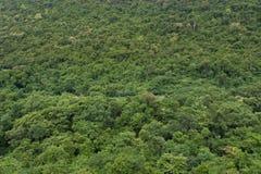 Tropikalny tropikalny las deszczowy, ta Tajlandia park narodowy (świat Obraz Royalty Free