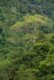 Tropikalny tropikalny las deszczowy, ta Tajlandia park narodowy (świat Obrazy Stock