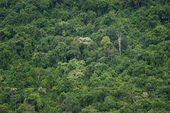 Tropikalny tropikalny las deszczowy, ta Tajlandia park narodowy (świat Zdjęcie Stock
