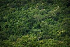 Tropikalny tropikalny las deszczowy, ta Tajlandia park narodowy (świat Obrazy Royalty Free