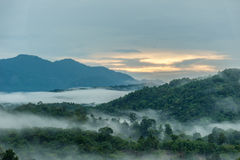Tropikalny tropikalny las deszczowy w Hala-Bala przyrody sanktuarium ranek Zdjęcia Royalty Free