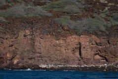 Tropikalny widok, Lanai punkt obserwacyjny, Hawaje Fotografia Royalty Free