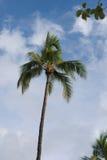 Tropikalny widok, Lanai punkt obserwacyjny, Hawaje Zdjęcie Royalty Free
