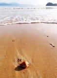 Tropikalny wyspy plaży głąbik Obrazy Stock