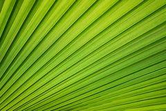 Tropikalny wzór na palmowym liściu Tło linie Świeży i naszły tropikalny tło zdjęcie royalty free