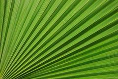 Tropikalny wzór na palmowym liściu Tło linie Świeży i naszły tropikalny tło zdjęcia royalty free