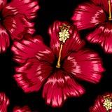 Tropikalny wzór z czerwonymi królewskimi kwiatami zdjęcie royalty free