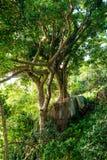 Tropikalny zielony drzewo na skłonie Obrazy Royalty Free
