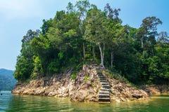 Tropikalny zielony las z betonowym schodkiem dla wspinać się Zdjęcie Stock