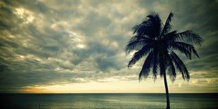 Tropikalny zmierzch Obrazy Stock