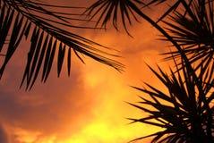 Tropikalny zmierzch zdjęcie stock