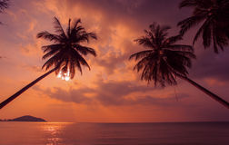 Tropikalny zmierzch Drzewka palmowe na tle Pacyficzny ocean Tajlandia Zdjęcie Stock