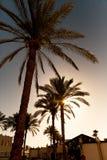 Tropikalny zmierzch z palmą obraz stock