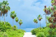 Tropikalny zmrok chmurnieje wapno zieleni roślinność na ścieżce wyrzucać na brzeg obraz royalty free