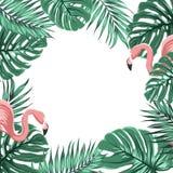Tropikalnych granicy ramy liści flaminga różowi ptaki Obrazy Royalty Free