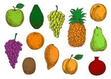 Tropikalnych i egzotycznych owoc odosobnione ikony Zdjęcie Royalty Free