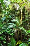 Tropikalnych lasów deszczowych drzewka palmowe Obraz Royalty Free