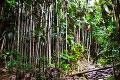 Tropikalnych lasów deszczowych drzewka palmowe Zdjęcia Stock