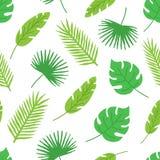 tropikalnych liści bezszwowy wzór na białym tle szczegółowy rysunek kwiecisty pochodzenie wektora Ręka rysujący monstera liść i p ilustracja wektor