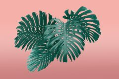 Tropikalnych li?ci duotone ramowy styl w czerwieni i turkus z bezp?atn? przestrzeni? dla tw?j teksta obraz royalty free