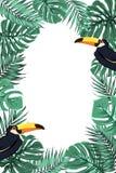 Tropikalnych liści pieprzojada ptaka granicy egzotyczna rama Zdjęcia Royalty Free