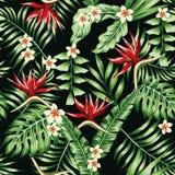 Tropikalnych rośliien i kwiatów bezszwowy czarny tło Obraz Stock