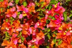 Tropikalnych rośliien i kwiatów tło Zdjęcia Stock