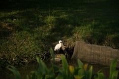 Tropikalnych rośliien i ptaków lasu środowisko obrazy stock