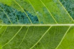 Tropikalnych rośliien szczegół, ogród botaniczny, Guayaquil Zdjęcie Stock
