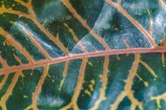 Tropikalnych rośliien szczegół, ogród botaniczny, Guayaquil Zdjęcie Royalty Free