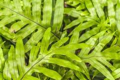 Tropikalnych rośliien szczegół, ogród botaniczny, Guayaquil Fotografia Stock