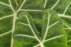 Tropikalnych rośliien szczegół, ogród botaniczny, Guayaquil Obrazy Royalty Free