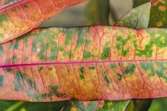 Tropikalnych rośliien szczegół, ogród botaniczny, Guayaquil Fotografia Royalty Free