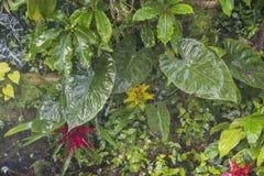 Tropikalnych rośliien tło Zdjęcia Royalty Free