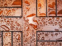 Tropikerna på mahognytabellen Fotografering för Bildbyråer
