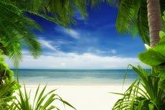 Tropique Images libres de droits