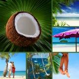 Tropique Image stock