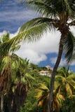 tropiques Photo libre de droits