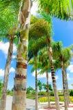 Tropisch Royalty-vrije Stock Foto