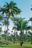Tropisch Lizenzfreies Stockbild